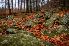 Fermez-vous sur la forêt d'automne avec des roches pleines de la mousse et des feuilles tombées colorées au sol images libres de droits
