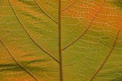 Fermez-vous sur la texture jaune-orange de feuille Photo stock