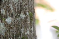 Fermez-vous sur le tronçon d'arbre avec de la mousse photos libres de droits
