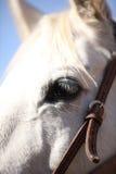 Fermez-vous sur le visage et les yeux de cheval Photos stock