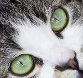 Fermez-vous sur un chat Image stock