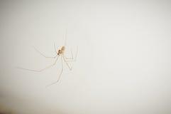 Fermez-vous vers le haut à la maison de l'araignée sur le mur blanc Photographie stock libre de droits