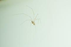 Fermez-vous vers le haut à la maison de l'araignée sur le mur blanc Photographie stock