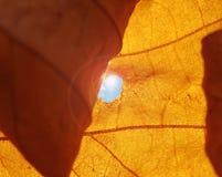 Fermez-vous vers le haut d'Autumn Leaf Lens Flare Photographie stock libre de droits