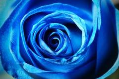 Fermez-vous vers le haut d'un bleu s'est levé Photo libre de droits
