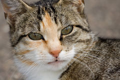 Fermez-vous vers le haut d'un chat Photo libre de droits