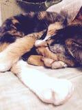 Fermez-vous vers le haut d'un chat au sommeil de la photo de couleur de vintage photo libre de droits