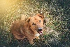 Fermez-vous vers le haut d'un chien Photos libres de droits