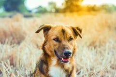 Fermez-vous vers le haut d'un chien Image libre de droits