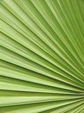 Fermez-vous vers le haut d'un palmier Image libre de droits