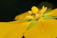 Fermez-vous vers le haut d'une fleur jaune photographie stock libre de droits