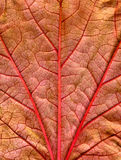 Fermez-vous vers le haut d'une lame d'automne. images libres de droits