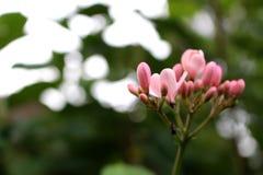 Fermez-vous vers le haut de belles fleurs étonnantes sur le fond vert de feuille au jardin Photo libre de droits