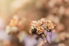 Fermez-vous vers le haut de belles fleurs sèches sur la tache floue lumineuse de fond Photographie stock