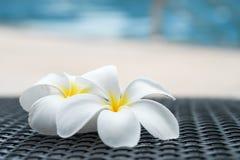 Fermez-vous vers le haut de deux fleurs de Plumeria ou de Frangipani sur un côté de piscine Photographie stock