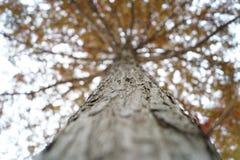 Fermez-vous vers le haut de l'écorce d'arbre Image stock