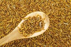 Fermez-vous vers le haut de l'alimentation de ver de farine pour des animaux dans la cuillère en bois dans la marque photos stock