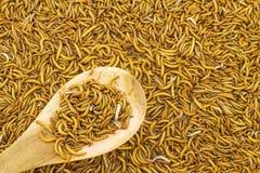 Fermez-vous vers le haut de l'alimentation de ver de farine pour des animaux dans la cuillère en bois dans la marque Photo stock