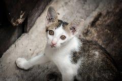 Fermez-vous vers le haut de l'appareil-photo de observation de chat de bête perdue de portrait photo libre de droits
