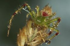 Fermez-vous vers le haut de l'araignée 2 Photos libres de droits