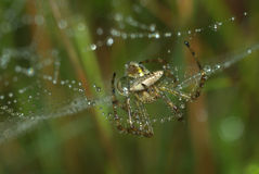 Fermez-vous vers le haut de l'araignée Image stock