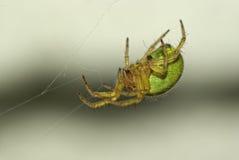 Fermez-vous vers le haut de l'araignée 2 Images stock