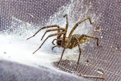 Fermez-vous vers le haut de l'araignée images stock