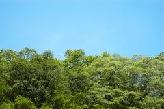 Fermez-vous vers le haut de l'arbre et du ciel bleu Photos libres de droits