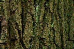 Fermez-vous vers le haut de l'?corce d'arbre en bois photo stock