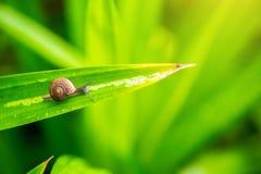 Fermez-vous vers le haut de l'escargot sur le congé vert dans moring signe d'escargot de l'humidité et pluvieux papier peint norm photo stock