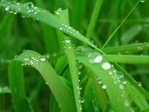 Fermez-vous vers le haut de l'herbe épaisse fraîche Photographie stock libre de droits