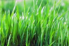 Fermez-vous vers le haut de l'herbe épaisse fraîche Photographie stock