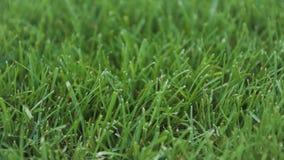 Fermez-vous vers le haut de l'herbe épaisse fraîche banque de vidéos