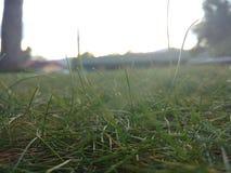 Fermez-vous vers le haut de l'herbe Photos libres de droits