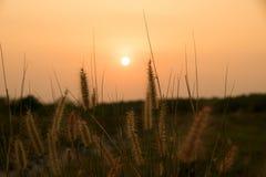 Fermez-vous vers le haut de l'herbe de desho et de la lumière du soleil dans le temps de soirée Photographie stock libre de droits