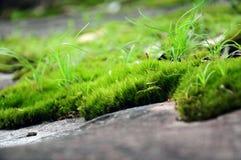 Fermez-vous vers le haut de l'herbe sur la pierre dans le phitsanulok de kla de rong de hin de phu Photo stock