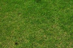 Fermez-vous vers le haut de l'herbe verte dans le domaine Image libre de droits