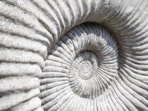 Fermez-vous vers le haut de l'image détaillée de la texture de fossile d'ammonite Image stock