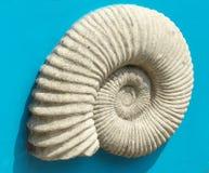 Fermez-vous vers le haut de l'image détaillée de la texture de fossile d'ammonite Photo stock