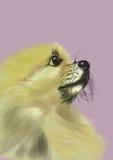 Fermez-vous vers le haut de l'image de esquisse de tête-pomeranian de chien Illustration de Vecteur