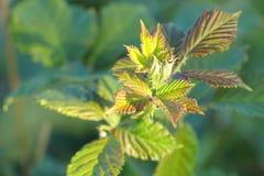 Fermez-vous vers le haut de l'image de la nouvelle croissance de plantes photo stock