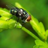 Fermez-vous vers le haut de l'insecte photographie stock
