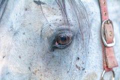 Fermez-vous vers le haut de l'oeil du cheval Photo libre de droits
