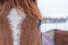Fermez-vous vers le haut de l'oeil du cheval Photos libres de droits