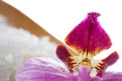 Fermez-vous vers le haut de l'orchidée Images stock