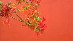 Fermez-vous vers le haut de la belle fleur en nature comme fond 4K, clip vid?o d'UHD banque de vidéos