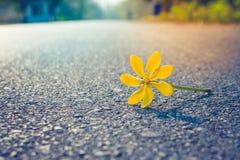 Fermez-vous vers le haut de la belle fleur jaune tombant sur la route avec le fond de lumière du soleil pendant le matin photographie stock