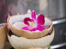 Fermez-vous vers le haut de la belle orchidée rose Image stock