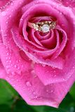 Fermez-vous vers le haut de la boucle d'or dans le rose s'est levé Images stock