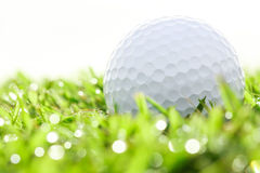 Fermez-vous vers le haut de la boule de golf sur l'herbe Image libre de droits